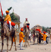 Horse & Camel rides