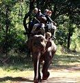 Jeep Safari/wildlife excursion in a tiger territory