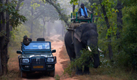 Wildlife jeep safari by highly-trained naturalists